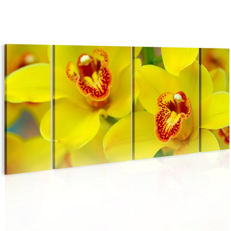Obraz  Orchids  intensity of yellow color