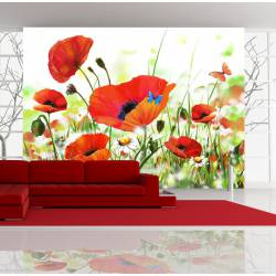 Fototapeta  Country poppies